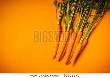 fresh crunchy carrots on an orange background