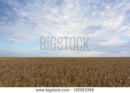 The summer landscape with field and sky