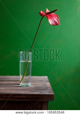 Anthurium flower in a glass of water on a green background