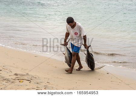 Tamarin Mauritius - December 8 2015: Fisherman dragging two tuna on the beach of Tamarin Bay in Mauritius.