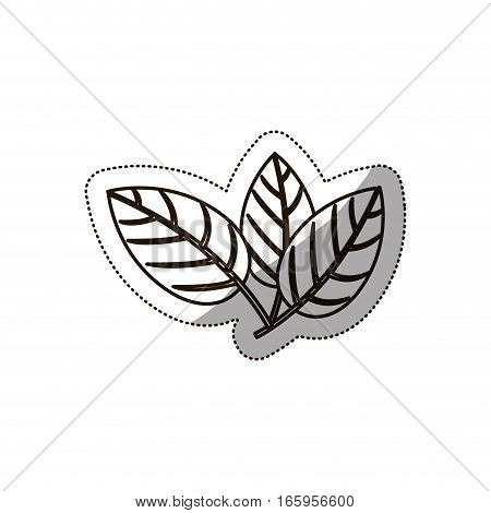 sticker medium shade of leaves with ramifications vector illustration