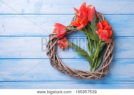 Decorative heart and pink spring tulips flowers on blue painted wooden background. Selective focus.Top view. Flat lay. Place for text.
