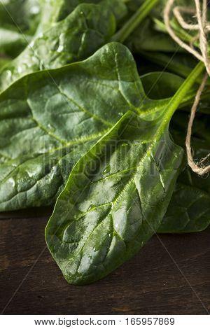 Raw Green Healthy Organic Spinach