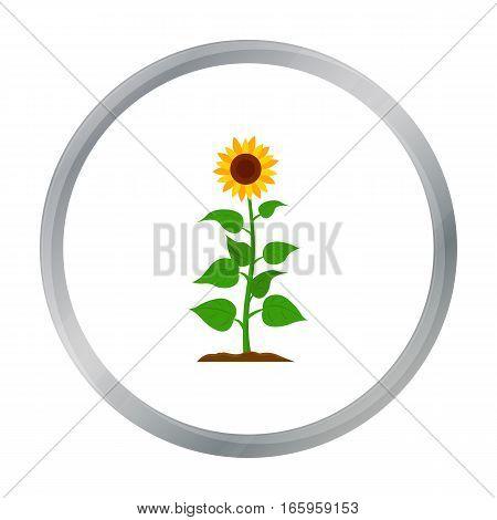 Sunflower icon cartoon. Single plant icon from the big farm, garden, agriculture cartoon. - stock vector