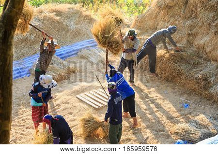 Manual Rice Threshing