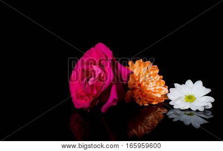 Aster, roses, sunflowers and chamomile flowers background isolated