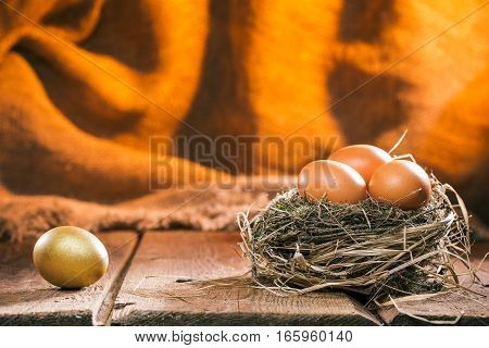 Ordinary chicken eggs in natural birds nest. Golden egg is lying separately