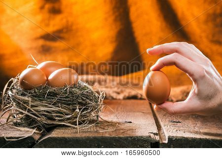 Uncooked eggs in natural birds nest. One egg is in the human hand