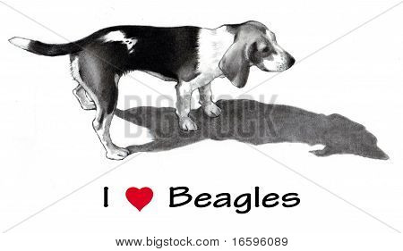 Realism pencil drawing of a Beagle, along with the words: I (Heart) Beagles. poster