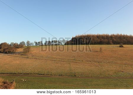 A frosty winter landscape with a grassy valley and woodlands on the scenic Yorkshire wolds.