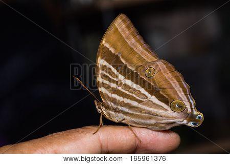 Palmking Butterfly On Finger