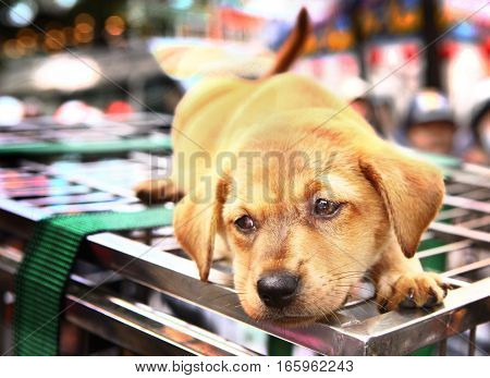 puppy on cage for sail on ho chi mihn city street in vietnam