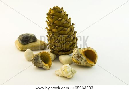 Pine cones hit the beach. Now you need to hide among the rocks.