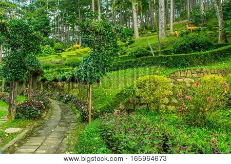 Landscape design of relax tropical garden vietnam