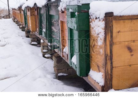 The beekeepers collect honey by the bees in winter .