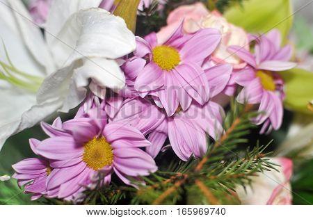 Pink flowers blooming beautiful view tenderness card