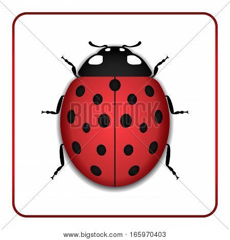 Ladybug Red Cartoon Icon Realistic