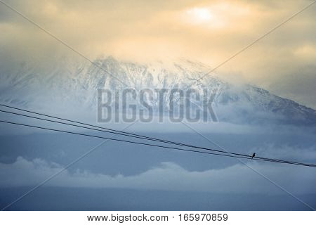 Mount Kilimanjaro Kenia the highest mountain in Africa. electric wire with a bird in the foreground
