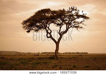 Tree in the African savannah. Amboseli national park in Kenia