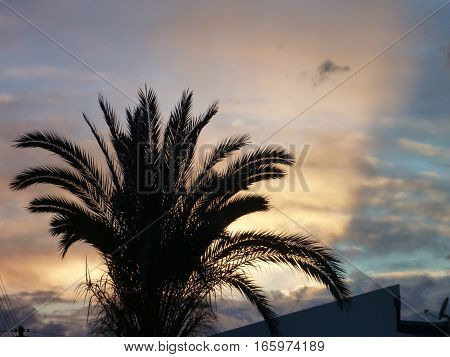 Palm Tree In A Beautiful Romantic Sunset