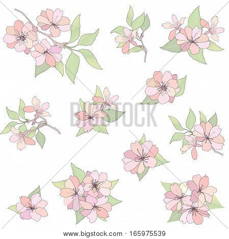 Floral spring background. Flower apple tree branch blossom set.