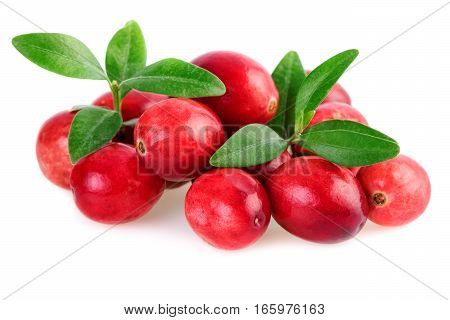 Isolated cranberries closeup. Fresh cranberries with leaves isolated on white