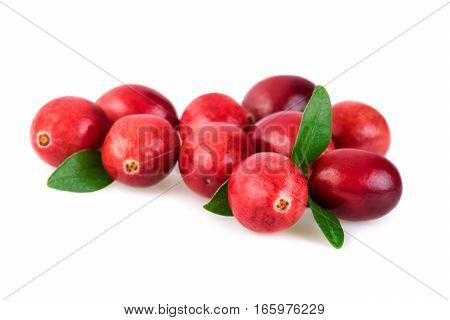 Cranberries closeup. Fresh cranberries with leaves isolated on white