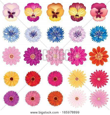 Flower bloom set. Different summer  flower head. Floral decor design element collection