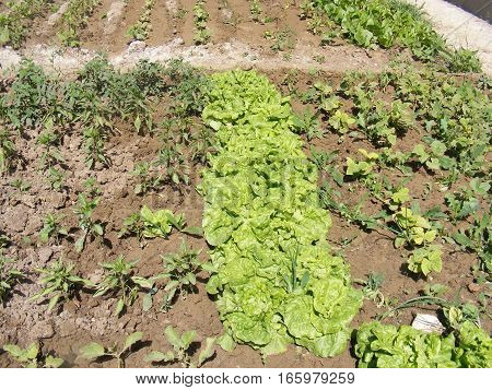 Natural hobby garden and organic curly pictures