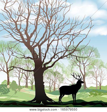 Forest-deer-background-1