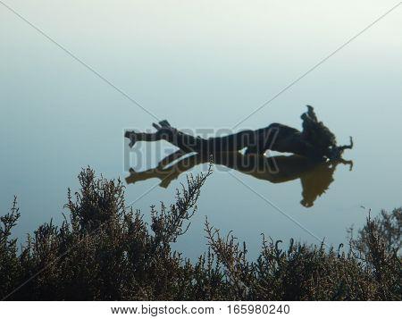 A Tree Fallen Into A Lake