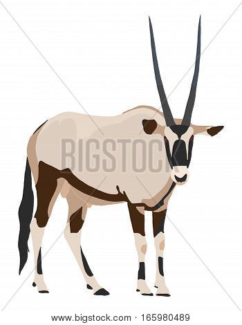 Oryx From Side, Looking Towards, Illustration