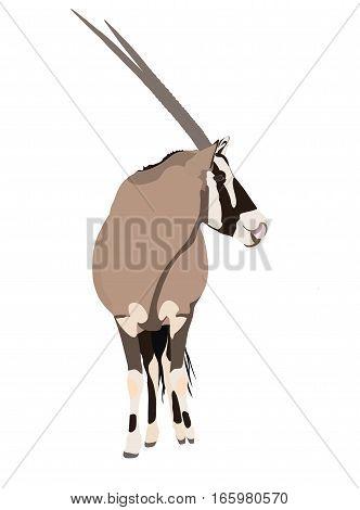 Illustration Wilde Tiere - Oryx 3