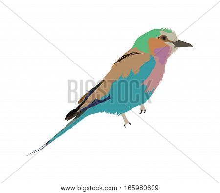 Illustration Wilde Tiere - Lilac Breasted Roller