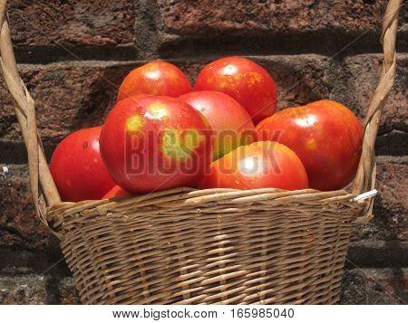 tomates rojos en una cesta al sol
