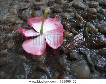 pequeña flor caída sobre fondo de piedras