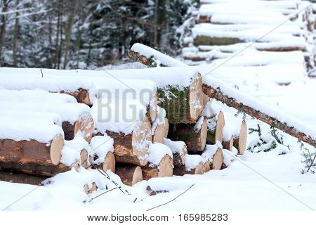 Felled wood under snow.  Wood for the fireplace or wood products. Left for the winter in the snow.