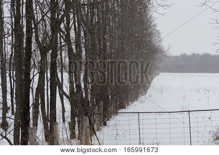 Background image of deciduous trees with no leaves in winter along the fenceline of a field with snow on the ground and an old wire gate.