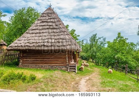 Ancient traditional ukrainian rural cottage with a straw roof and sheep flock