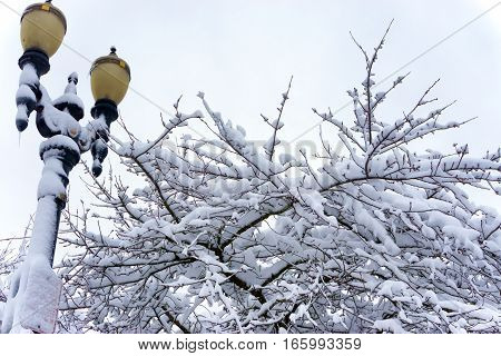 Streetlight and tree covered in deep snow in Portland Oregon