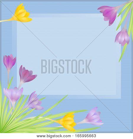 Crocuses - small spring-flowering plant of the iris family.