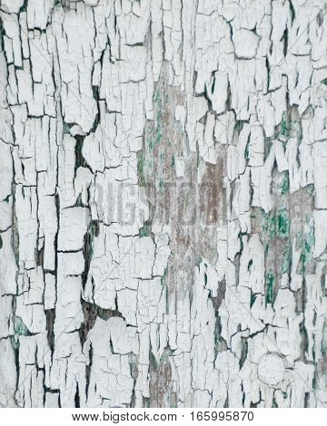 Thick white peeling cracked paint with green underneath. On an old outbuilding on a farm.