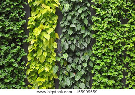 Close-up shot of a Green Wall variation