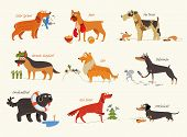 Dog breeds. Cocker Spaniel, Collie, Newfoundland, Doberman, Fox Terrier, Irish Setter, Dachshund, Boxer, German Shepherd. Funny cartoon character. Vector illustration Isolated on white background. Set poster