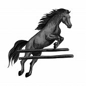 Black racing horse mustang jumping over barrier and running on horseraces. Vector sketch horse stallion for equestrian sport races and bets, horse riding, equine exhibition design poster