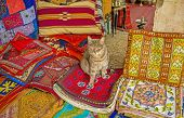 The puss sits on the handmade embroidered pillowcases in the Market stall Jerusalem Israel. poster