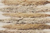 Dried white fluffy cattail or typha flower texture background, top view on white wood. Absract floral composition poster