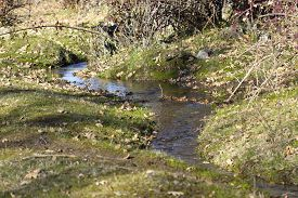 Small water stream crossing a grass field.