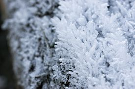 Closeup image of small ice crystals growing on wood surface.