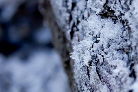Closeup image of small ice crystals covering the surface of wood tree.